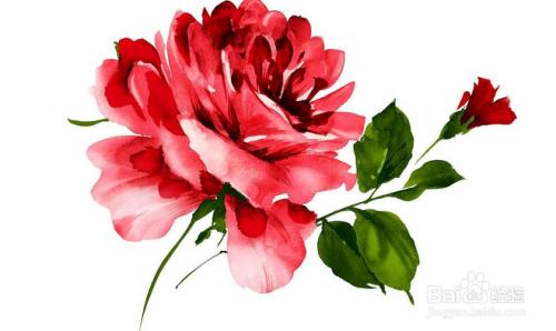 如今鲜花是人们生活中的一部分,现在是春暖花开的时候了,公园里已经开满了各种好看的花了,在情人节里,送给情人,在母情节里,送给母亲,每种花都代表的不同的意义,那么,哪些鲜花有代表着爱情呢?