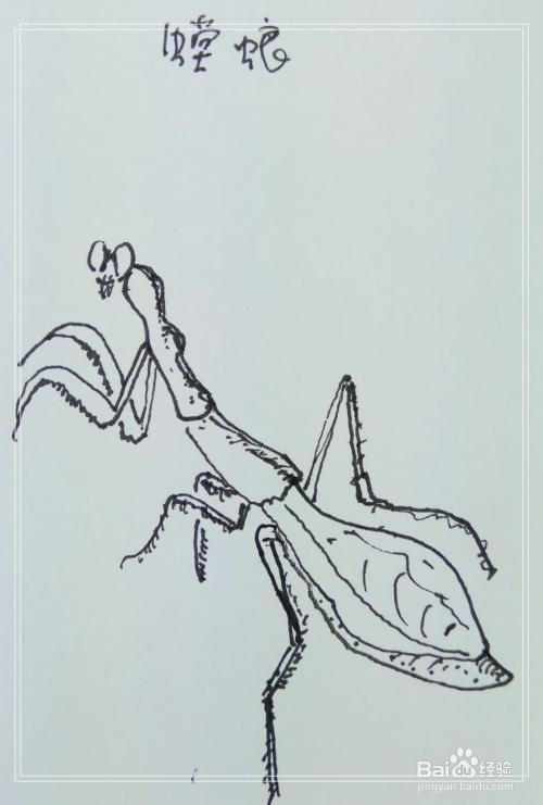 怎样画简笔画 螳螂