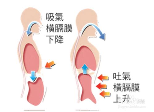 播音主持呼吸原理是什么_播音主持有什么证