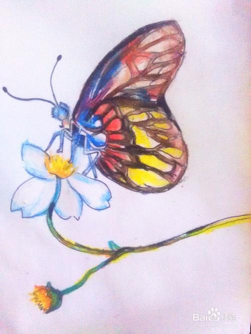 蜡笔画 蝴蝶与花