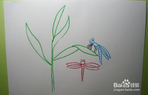 彩色简笔画兰花和小蜻蜓