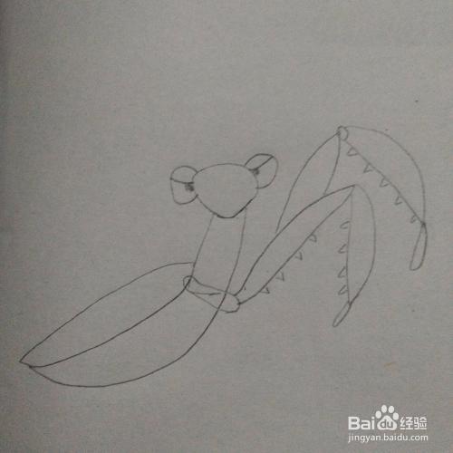 长着大钳子的螳螂简笔画