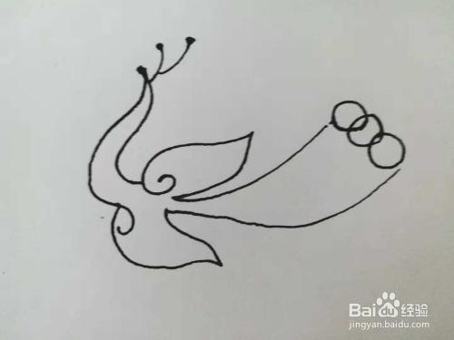 孔雀的简笔画法 一