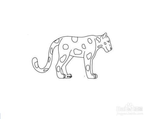 花豹的简笔画