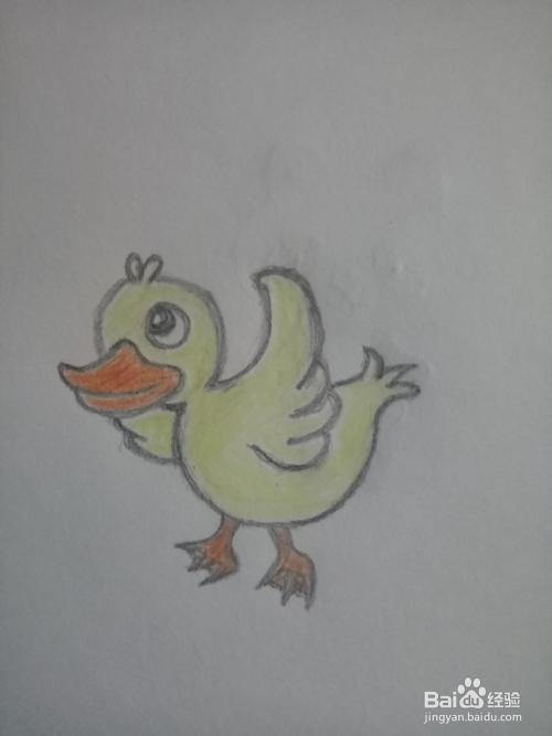 简笔画 可爱的小鸭子