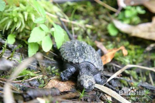 乌龟是什么时候冬眠的 详细介绍