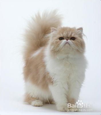 新手養貓必備知識
