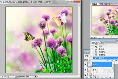 """7 5 蝴蝶群飞动画_如何用ps使得蝴蝶图片""""飞""""于花上,一秒变gif-百度经验"""