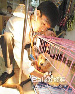 犬瘟中后期治疗