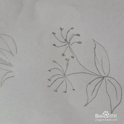 路边小花草的简笔画画法