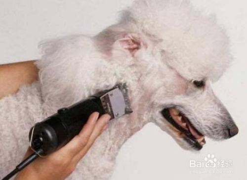如何帮狗狗过夏天?