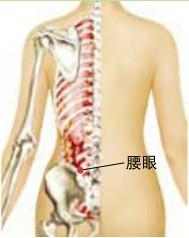 中医按摩:按摩腰眼穴可以很好的缓解腰膝酸软