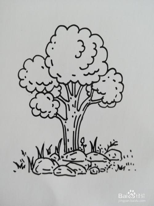 大树的简笔画怎么画,大树简笔画