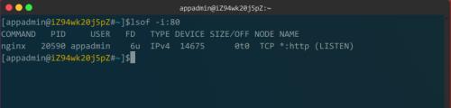 linux如何查看nginx是否启动