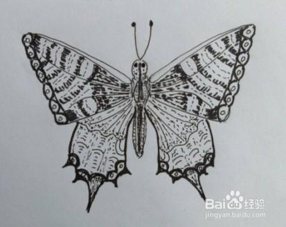 蝴蝶画法教程 9 怎么画,如何画蝴蝶 线描画