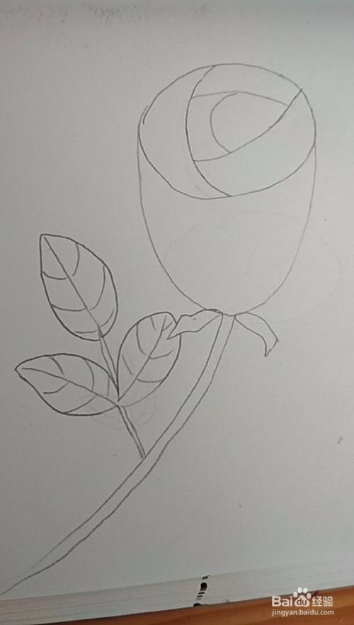 多妈简笔画简单的一朵玫瑰花