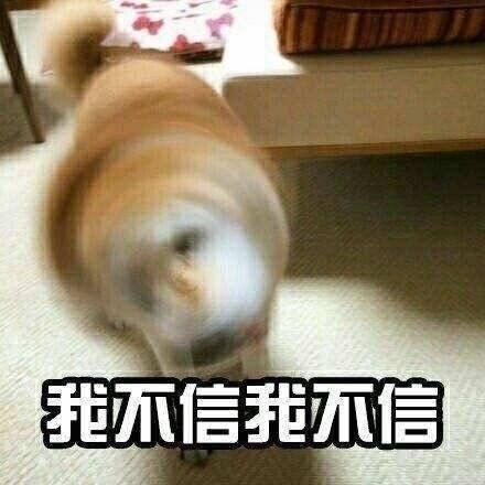 狗子表情包,qq表情包,微信表情包,