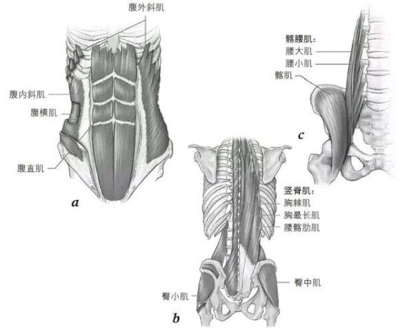 竖脊肌_回复(1)收起回复