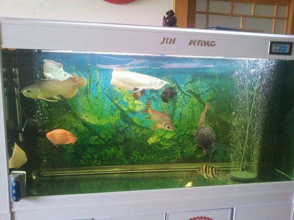 龙虎凤鱼_【图片】龙虎凤龟配齐全了【龙鱼吧】_百度贴吧
