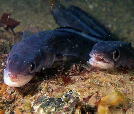 世界十大杀人鱼盘点:恐怖食人鱼慎点