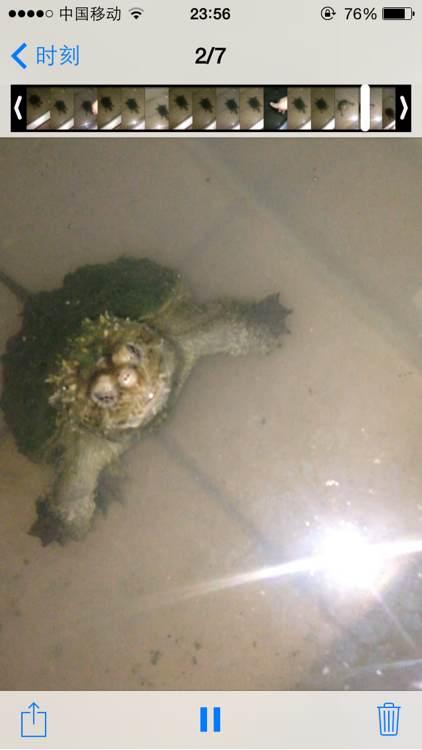 暴刺杂佛_【图片】180入的杂佛开始爆刺了【鳄龟吧】_百度贴吧