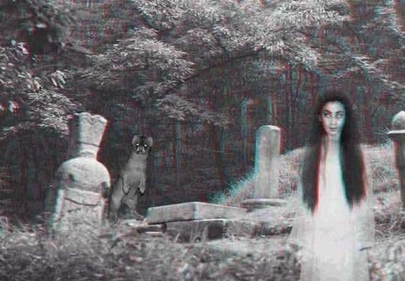 鬼吹灯中的怪物图片_黄皮子坟