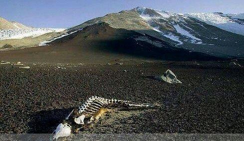 龙游石窟超现代_1983年,昆仑山的地狱之门,发现大量动物和人的尸体。地质部门 ...