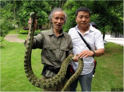 世界上最大五头蛇_2:眼镜王蛇为大型蛇类,最大全长记录中国3,806(3,276+53)mm ...