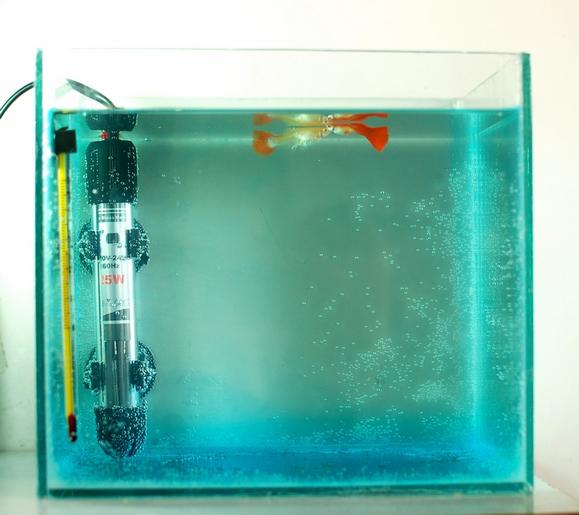 清理鱼缸的鱼种类_【图片】DIY的繁殖盒和小鱼缸【孔雀鱼吧】_百度贴吧