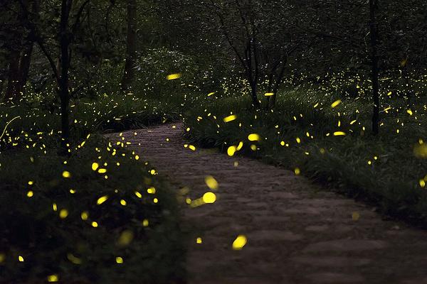 萤火虫公园将开放